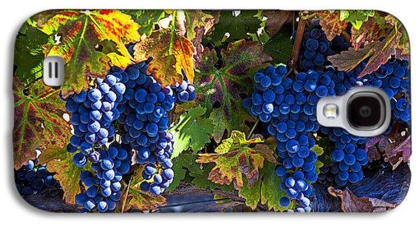 Grapes Ready For Harvest Galaxy S4 Case by Garry Gay