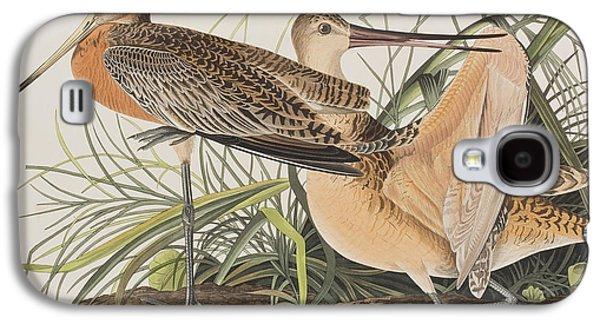 Great Birds Galaxy S4 Cases - Great Marbled Godwit Galaxy S4 Case by John James Audubon