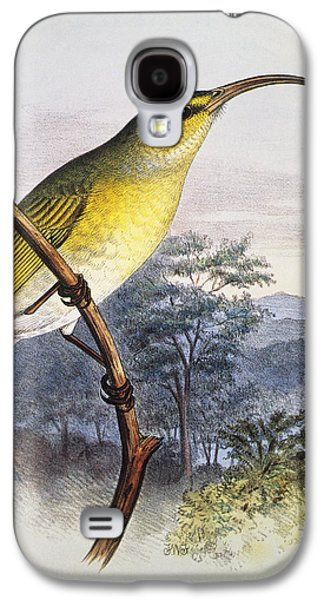 Yellow Beak Paintings Galaxy S4 Cases - Greater Akialoa Galaxy S4 Case by Hawaiian Legacy Archive - Printscapes