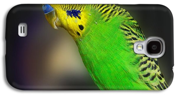 Green Parakeet Portrait Galaxy S4 Case by Jai Johnson