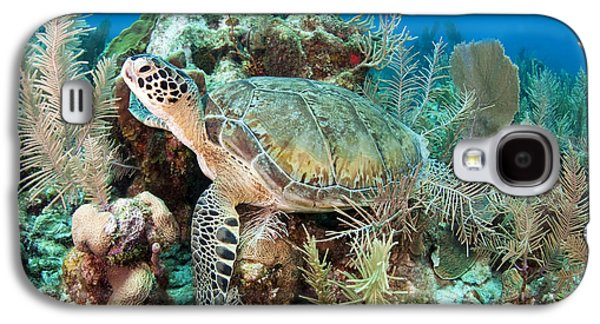 Undersea Photography Galaxy S4 Cases - Green Sea Turtle On Caribbean Reef Galaxy S4 Case by Karen Doody