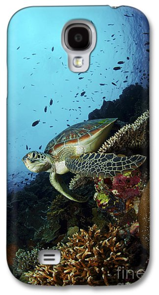 Undersea Photography Galaxy S4 Cases - Green Sea Turtle Resting On A Plate Galaxy S4 Case by Mathieu Meur