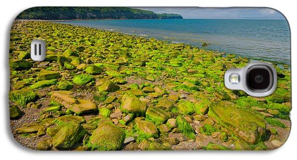 Alga Galaxy S4 Cases - Green Shore Galaxy S4 Case by Irwin Barrett