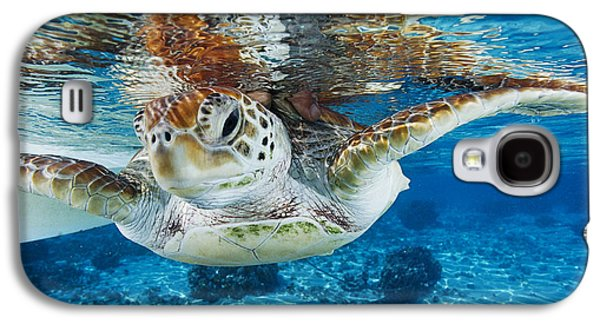 Green Turtle Galaxy S4 Case by Alexis Rosenfeld