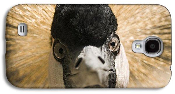 Birding Photographs Galaxy S4 Cases - Grey Crowned Crane Galaxy S4 Case by Chad Davis