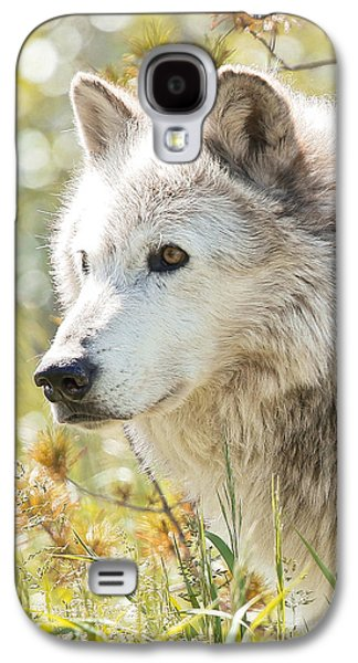 Puppies Galaxy S4 Cases - Grey Wolf In The Summer Sun Galaxy S4 Case by Athena Mckinzie