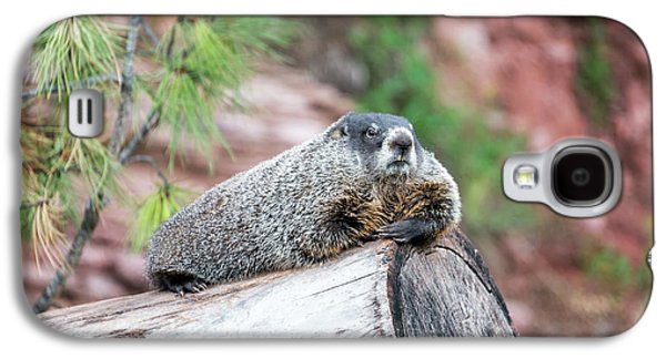 Groundhog On A Log Galaxy S4 Case by Jess Kraft