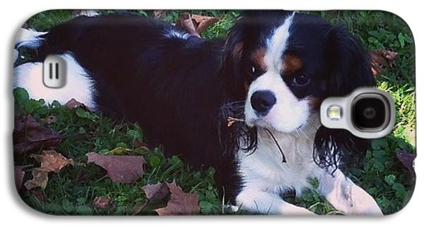 Puppies Galaxy S4 Cases - Happy Fall Galaxy S4 Case by Lisa Siddell