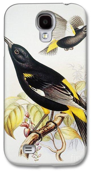 Yellow Beak Paintings Galaxy S4 Cases - Hawaii Mamo Galaxy S4 Case by Hawaiian Legacy Archive - Printscapes
