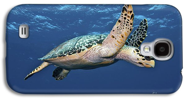 Hawksbill Sea Turtle In Mid-water Galaxy S4 Case by Karen Doody