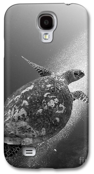 New Britain Galaxy S4 Cases - Hawksbill Turtle Ascending Galaxy S4 Case by Steve Jones