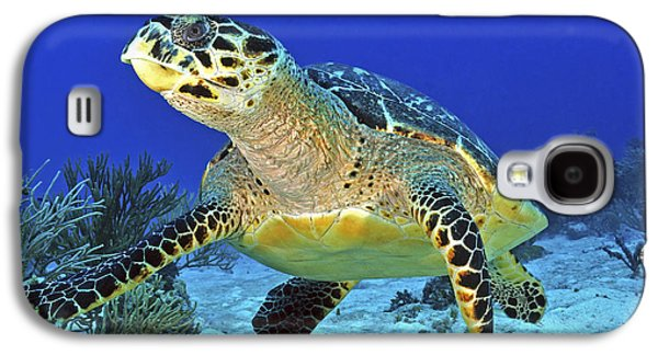 Undersea Photography Galaxy S4 Cases - Hawskbill Turtle On Caribbean Reef Galaxy S4 Case by Karen Doody