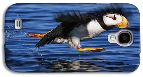 Action Photographs Galaxy S4 Cases - Horned Puffin  Fratercula Corniculata Galaxy S4 Case by Marion Owen