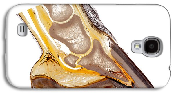 Feet Sculptures Galaxy S4 Cases - Horse hoof plastination 30210 Galaxy S4 Case by Christoph Von Horst
