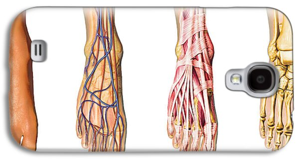 Internal Organs Galaxy S4 Cases - Human Foot Anatomy Showing Skin, Veins Galaxy S4 Case by Leonello Calvetti