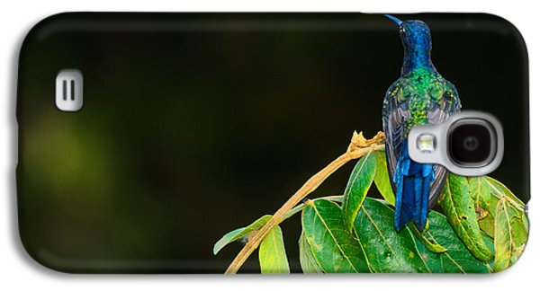 Nature Abstracts Galaxy S4 Cases - Hummingbird Galaxy S4 Case by Daniel Precht
