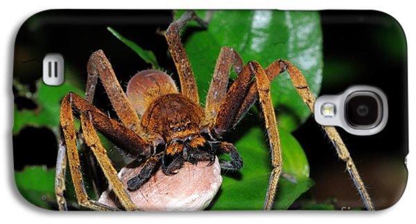 Huntsman Spider With Egg Sac Galaxy S4 Case by Fletcher & Baylis