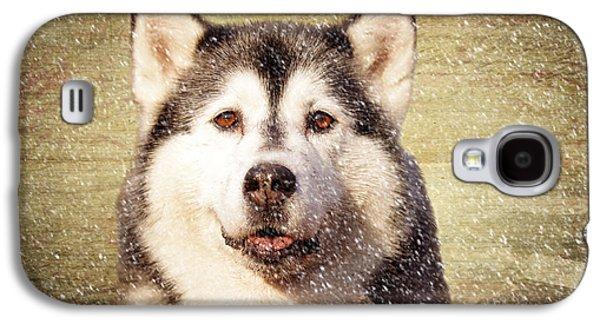 Husky Galaxy S4 Case by Stephen Smith