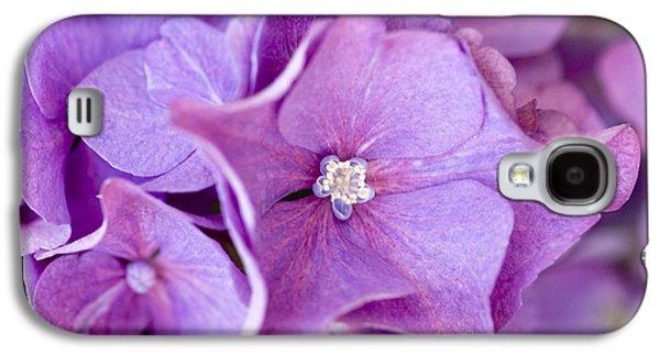 Garden Images Galaxy S4 Cases - Hydrangea Galaxy S4 Case by Frank Tschakert