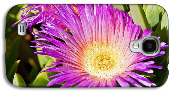 Kelley King Galaxy S4 Cases - Ice Plant Blossom Galaxy S4 Case by Kelley King