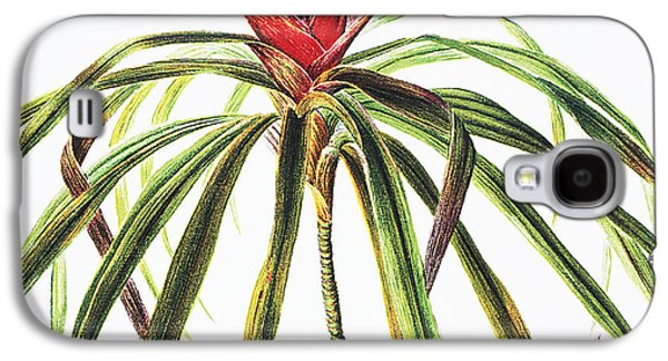 Nature Center Paintings Galaxy S4 Cases - Ieie Plant Galaxy S4 Case by Hawaiian Legacy Archive - Printscapes