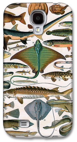 Aquatic Drawings Galaxy S4 Cases - Illustration of Ocean Fish Galaxy S4 Case by Alillot