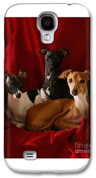 Italian Greyhound Trio 3 Galaxy S4 Case by Angela Rath