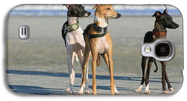 Italian Greyhounds On The Beach Galaxy S4 Case by Angela Rath