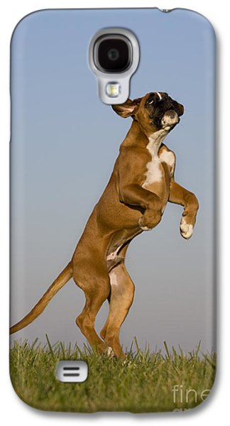 Boxer Galaxy S4 Cases - Jumping Boxer Puppy Galaxy S4 Case by Jean-Louis Klein & Marie-Luce Hubert