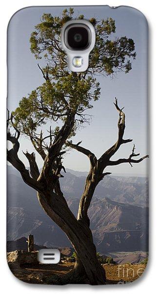Gordon Photographs Galaxy S4 Cases - Juniper Tree at Grand Canyon No. 2 Galaxy S4 Case by David Gordon