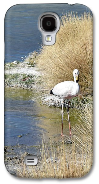 Juvenile Flamingo No. 64 Galaxy S4 Case by Sandy Taylor