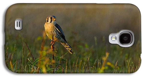 Americans Pyrography Galaxy S4 Cases - Kestrel in Meadow Galaxy S4 Case by William Jobes