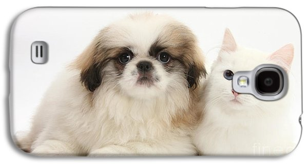 Domesticated Animals Galaxy S4 Cases - Kitten With Pekinese Puppy Galaxy S4 Case by Mark Taylor