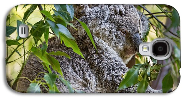Koala Joey Galaxy S4 Case by Jamie Pham