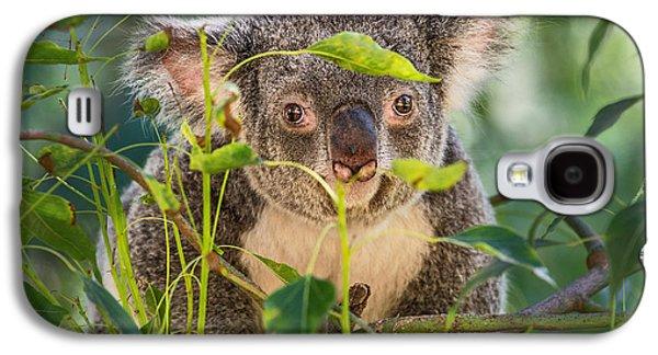 Koala Leaves Galaxy S4 Case by Jamie Pham