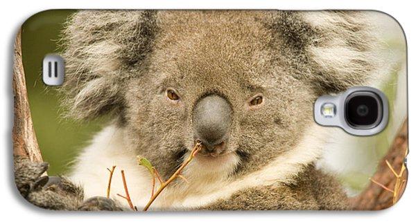 Koala Snack Galaxy S4 Case by Mike  Dawson