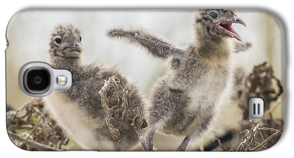 Original Photographs Galaxy S4 Cases - Laughing Gull Chicks Galaxy S4 Case by Paula Porterfield-Izzo