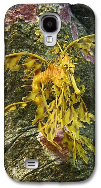 Leafy Sea Dragon Galaxy S4 Cases - Leafy Sea Dragon Against Colorful Rocks Galaxy S4 Case by Max Allen