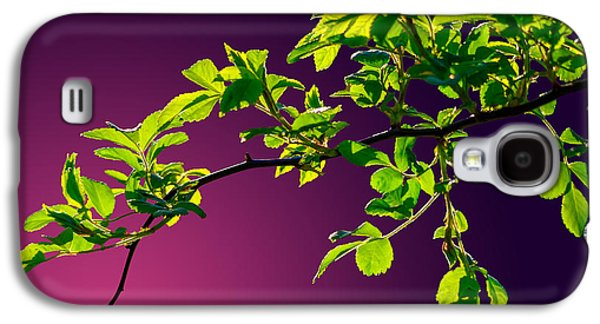 Nature Abstracts Galaxy S4 Cases - Leaves Of Eve 2 Galaxy S4 Case by Brian Stevens