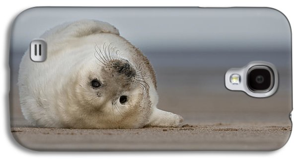 Ocean Mammals Galaxy S4 Cases - Lifes A Beach Galaxy S4 Case by Andy Astbury
