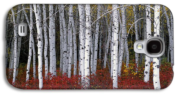 Light In Forest Galaxy S4 Case by Leland D Howard
