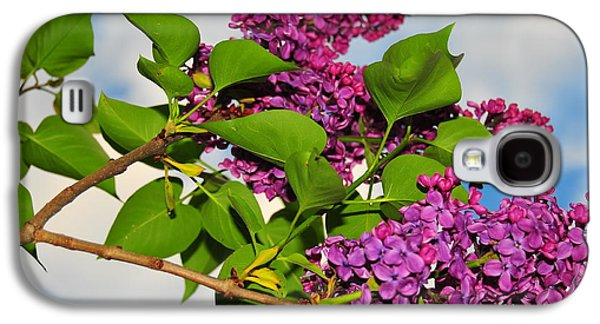 Catherine Reusch Daley Galaxy S4 Cases - Lilacs Galaxy S4 Case by Catherine Reusch  Daley