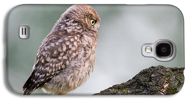 Baby Bird Galaxy S4 Cases - Little Owl Chick Practising Hunting Skills Galaxy S4 Case by Roeselien Raimond