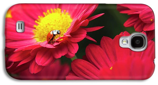 Little Red Ladybug Galaxy S4 Case by Christina Rollo