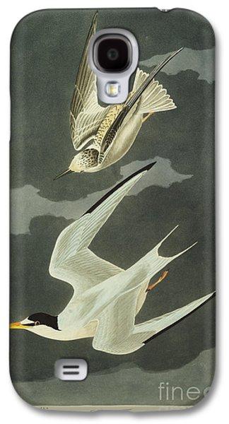 Little Tern Galaxy S4 Case by John James Audubon