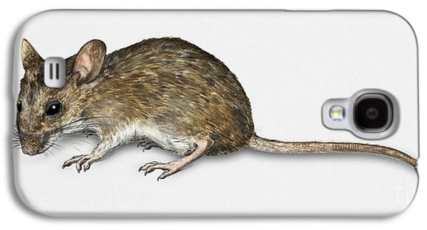 Nature Study Drawings Galaxy S4 Cases - Long Tailed Field Mouse Apodemus sylvaticus - Wood Mouse - Moulo Galaxy S4 Case by Urft Valley Art