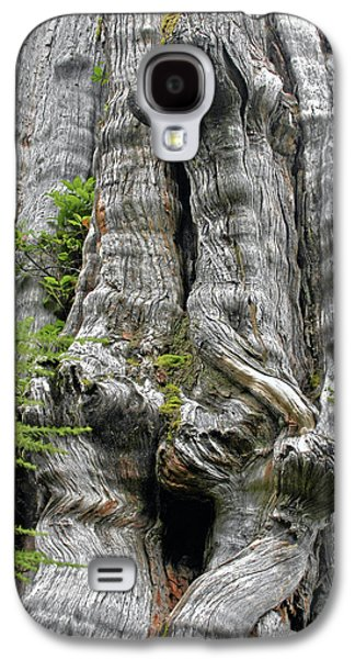 Strong America Galaxy S4 Cases - Long Views - Giant Western Red Cedar Olympic National Park WA Galaxy S4 Case by Christine Till