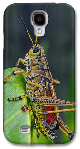 Lubber Grasshopper Galaxy S4 Case by Richard Rizzo