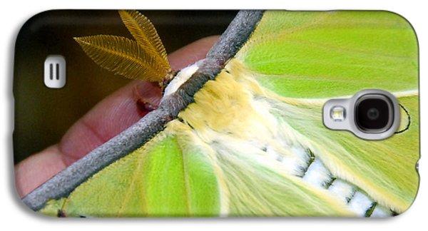 Green Galaxy S4 Cases - Luna Moth close up Galaxy S4 Case by David Lee Thompson