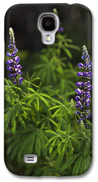 Light Galaxy S4 Cases - Lupine Galaxy S4 Case by Chad Dutson